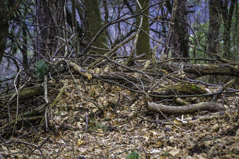Gevallen Bomen royalty-vrije stock fotografie