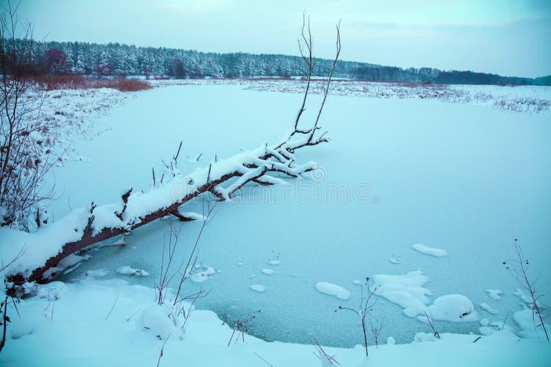 Gevallen boom in het bevroren meer stock afbeelding