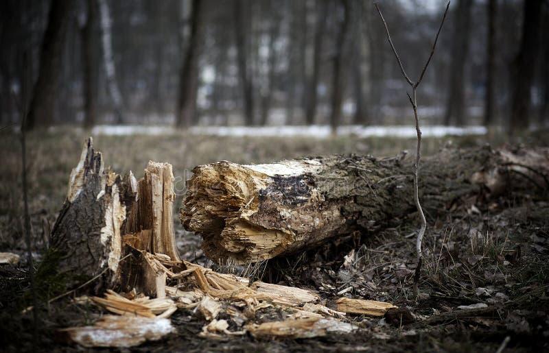 Gevallen boom in het bos stock foto's