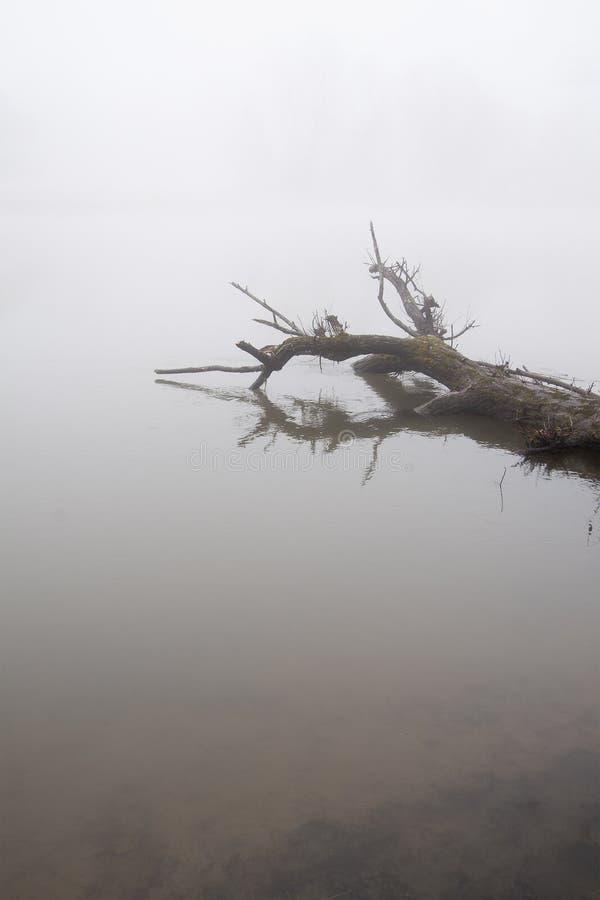 Gevallen boom in nog water met humeurige dichte mist royalty-vrije stock foto's