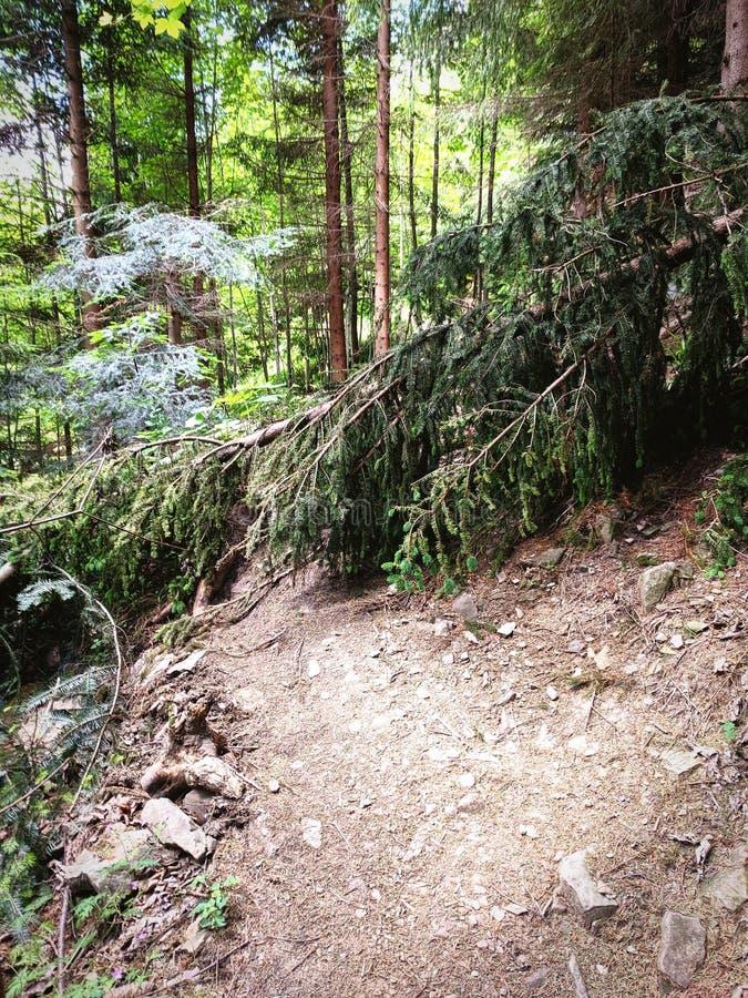 Gevallen boom op bergweg stock foto's