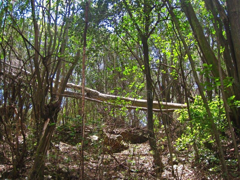 Gevallen boom op een bebost gebied royalty-vrije stock foto