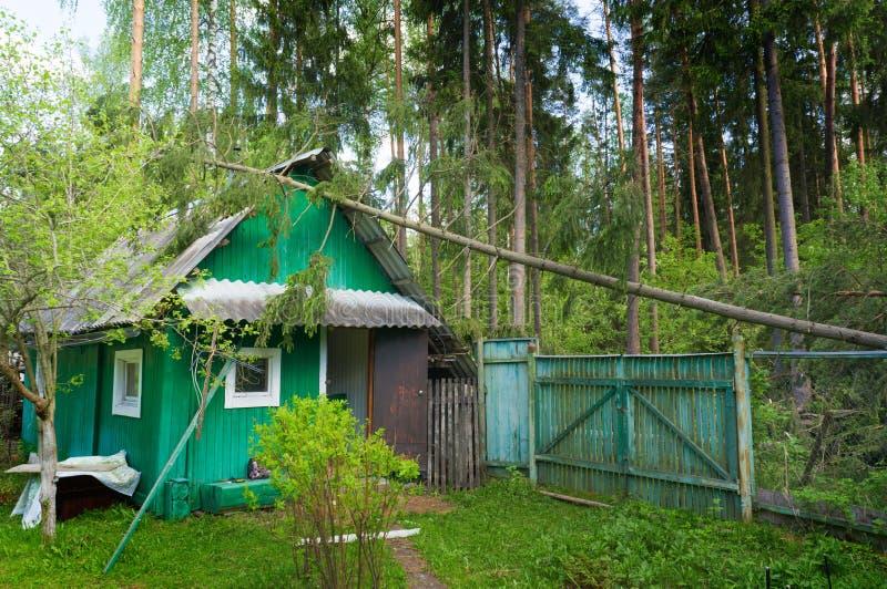 Gevallen boom op een blokhuis na een orkaan, in een net bos in het land, dalende boom na onweer stock afbeeldingen