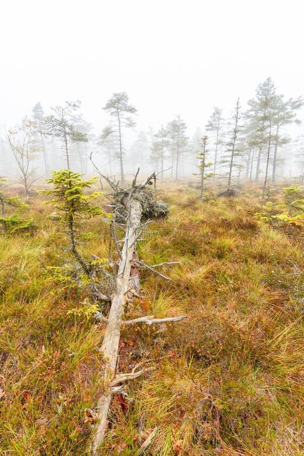 Gevallen boom op een moeras royalty-vrije stock foto