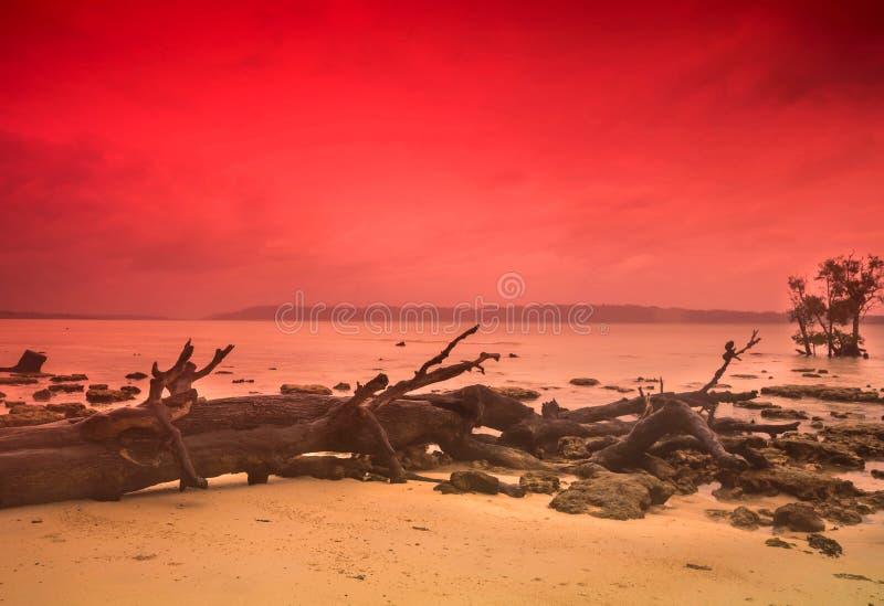 Gevallen boom op zee kust stock fotografie