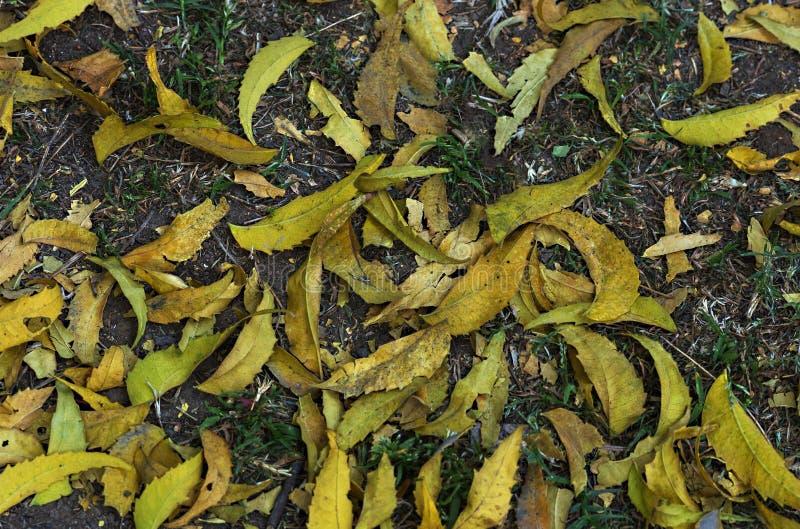 Gevallen boombladeren stock afbeeldingen