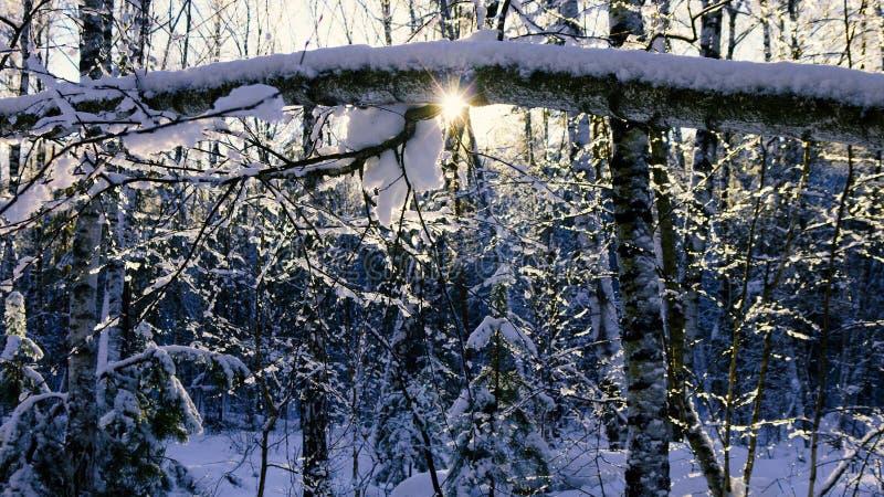 gevallen boomboomstam onder een laag van sneeuw stock afbeeldingen