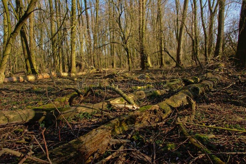 Gevallen boomboomstammen op de bosvloer royalty-vrije stock foto's
