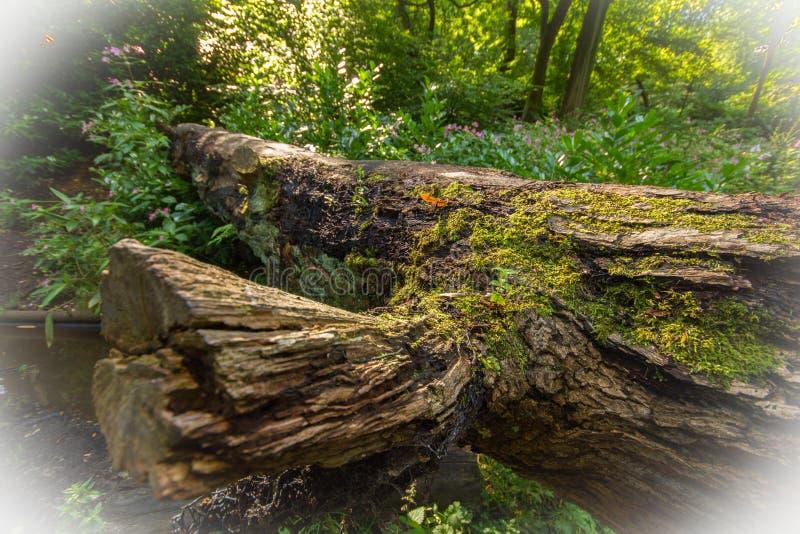 Gevallen boomlogboeken die op de bosvloer liggen royalty-vrije stock foto
