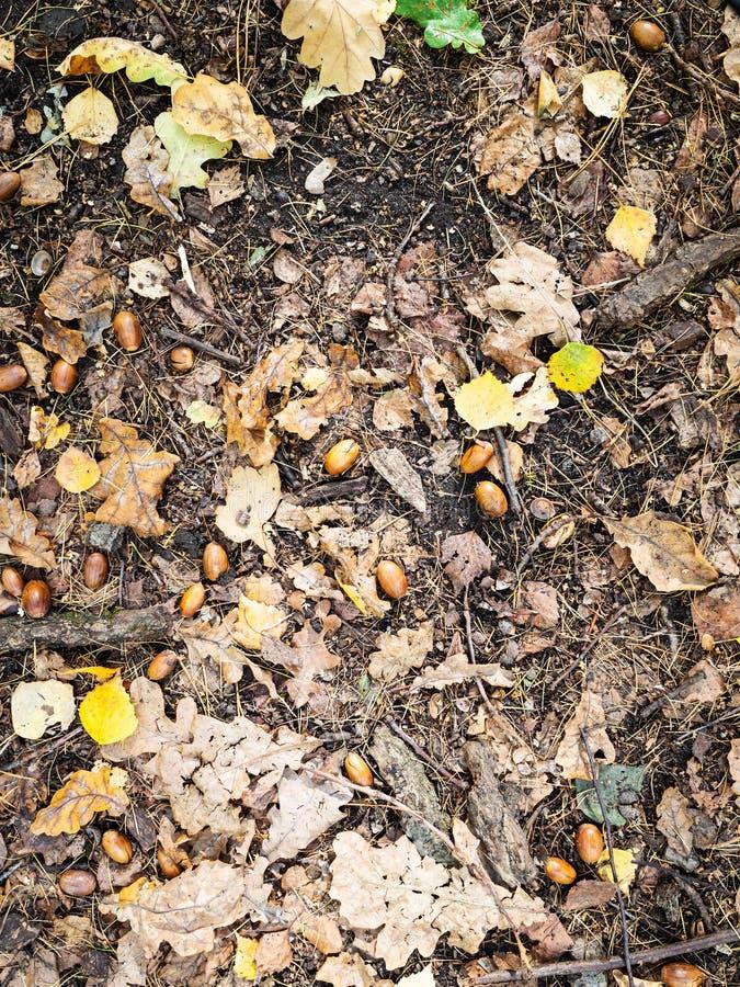 gevallen bruine eiken en gele berkbladeren op grond royalty-vrije stock fotografie