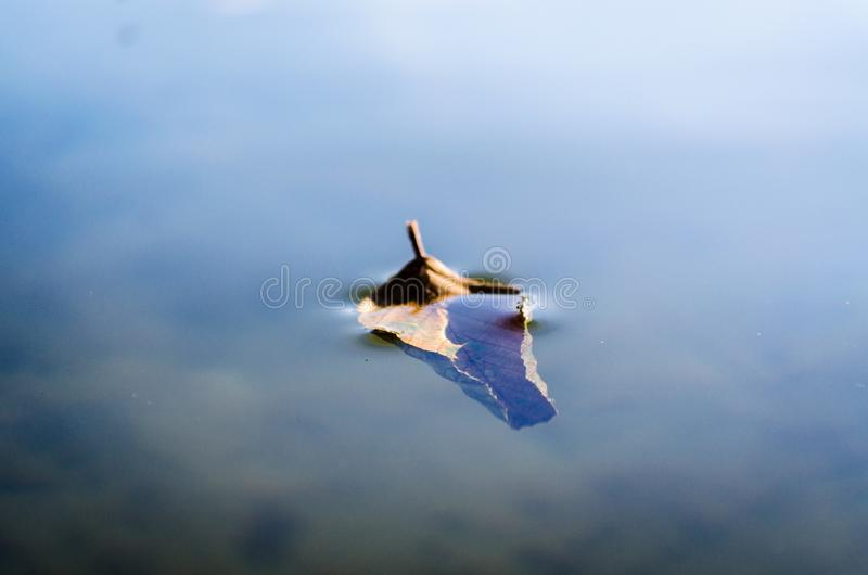 Gevallen de herfstblad op het water stock afbeeldingen