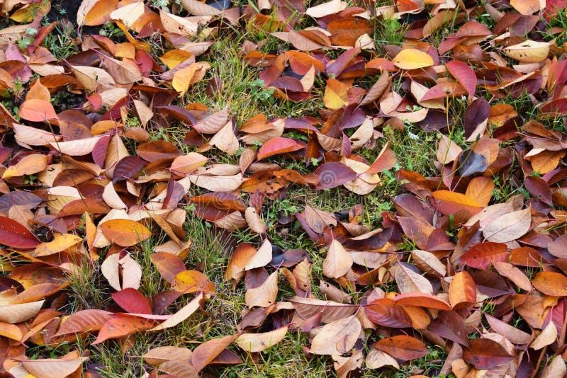 Gevallen de herfstbladeren royalty-vrije stock foto