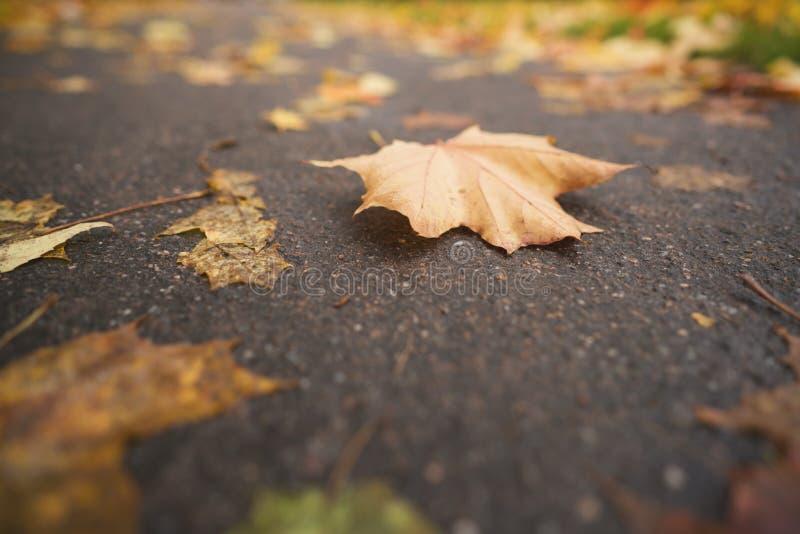 Gevallen de herfstbladeren op asfaltstoep in lage de hoekfoto van de midden oktoberclose-up royalty-vrije stock foto's