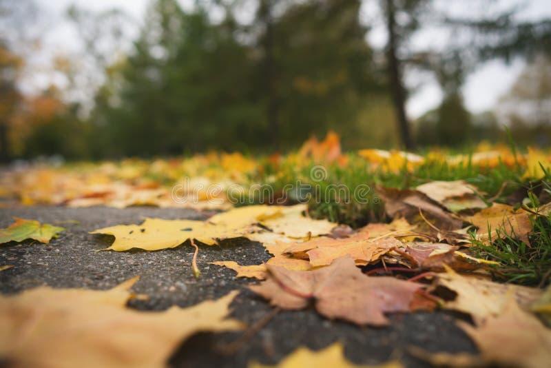 Gevallen de herfstbladeren op asfaltstoep in lage de hoekfoto van de midden oktoberclose-up stock foto