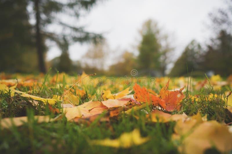 Gevallen de herfstbladeren op grond in lage de hoekfoto van de midden oktoberclose-up royalty-vrije stock foto's