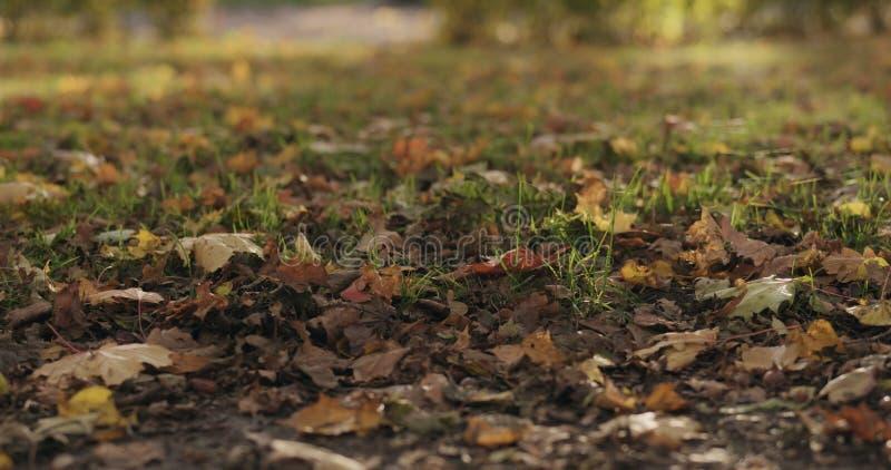 Gevallen de herfstbladeren op stadssteeg op een zonnige dag royalty-vrije stock foto