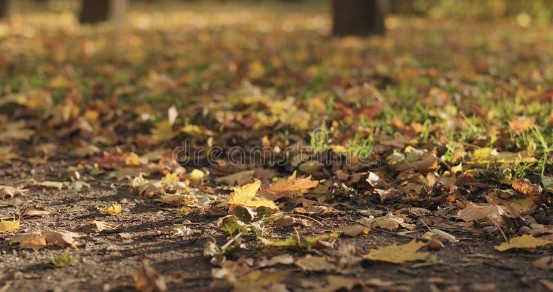 Gevallen de herfstbladeren op stadssteeg op een zonnige dag royalty-vrije stock afbeeldingen