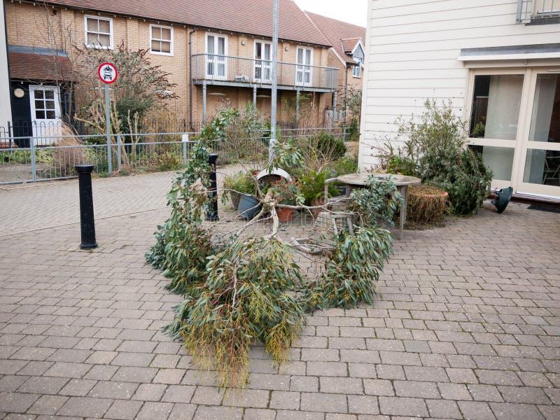 gevallen de pottenbestrating van de boominstallatie buiten huis stedelijke wind royalty-vrije stock afbeelding