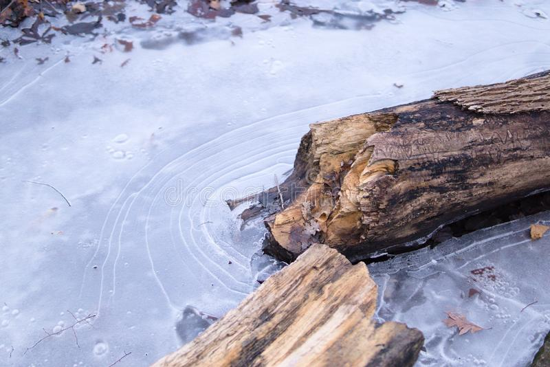 Gevallen die logboek in ijs op stroom wordt bevroren royalty-vrije stock afbeelding