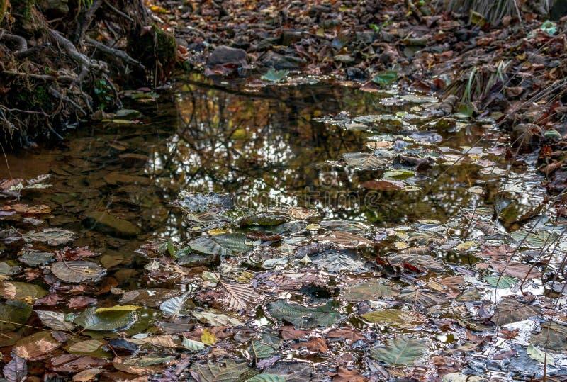 Gevallen droge bladeren van het de herfstbos in een vulklei na regen stock afbeeldingen