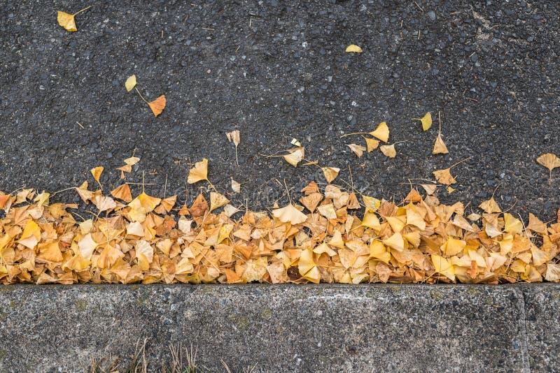 Gevallen ginkgobladeren stock fotografie