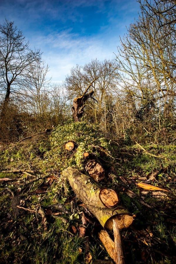 Gevallen haagboom stock foto
