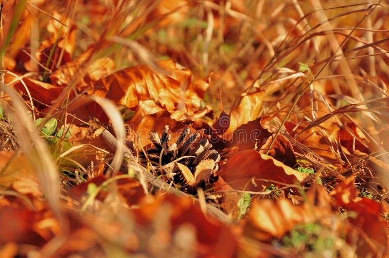 Gevallen kegel met roestige bladeren op gras royalty-vrije stock fotografie