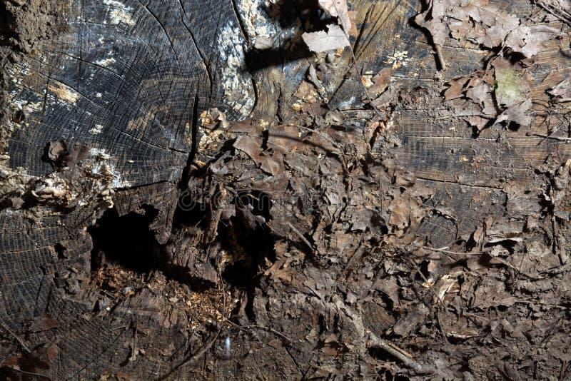 Gevallen logboekdetail stock afbeelding