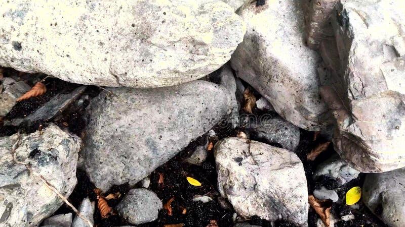 Gevallen moerbeibomen onder een boom op een steen stock fotografie
