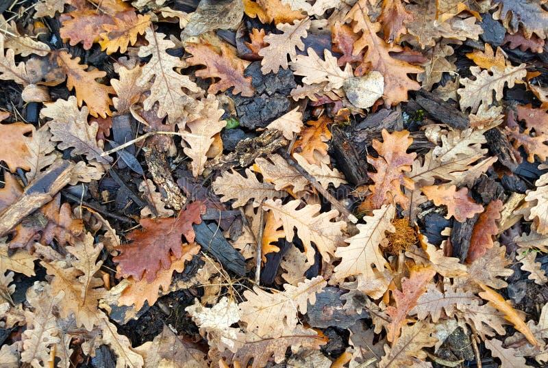 gevallen natte eiken bladeren en schors in de winter royalty-vrije stock foto's