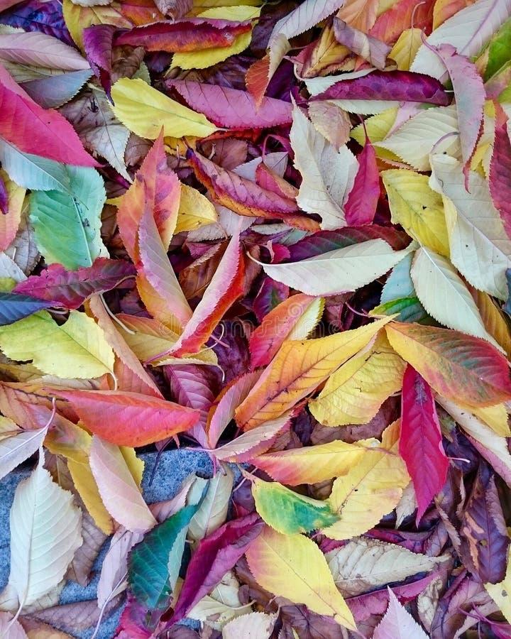 Gevallen Natuurlijke Kleuren stock fotografie