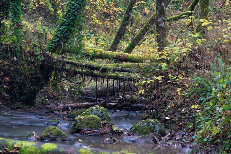 Gevallen oude logboeken over de rivier stock fotografie