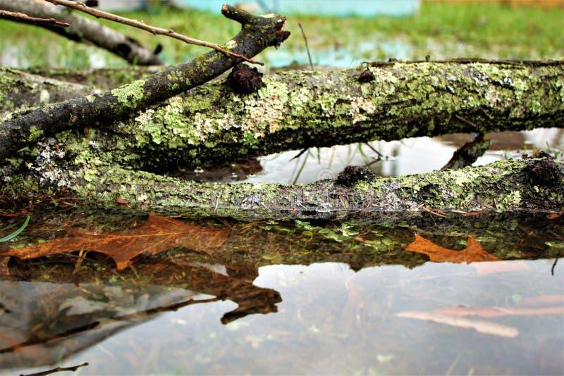 Gevallen takken in regenvulklei stock afbeeldingen