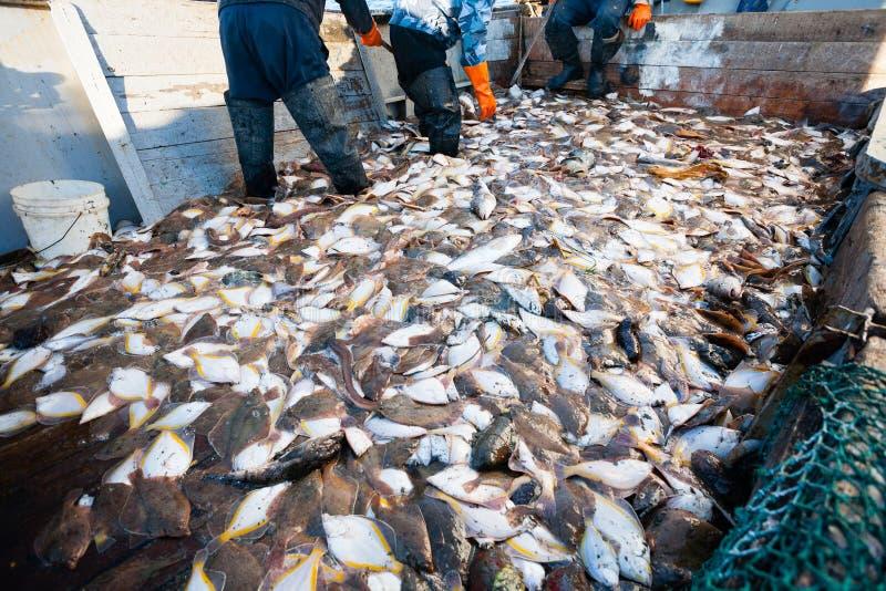 Gevangen overzeese vissen op het dek van een visserijschip stock afbeeldingen