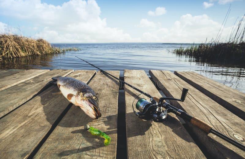Gevangen van zoetwater grote vissen - een snoek, die dichtbij het spinnen op de houten brug liggen royalty-vrije stock fotografie