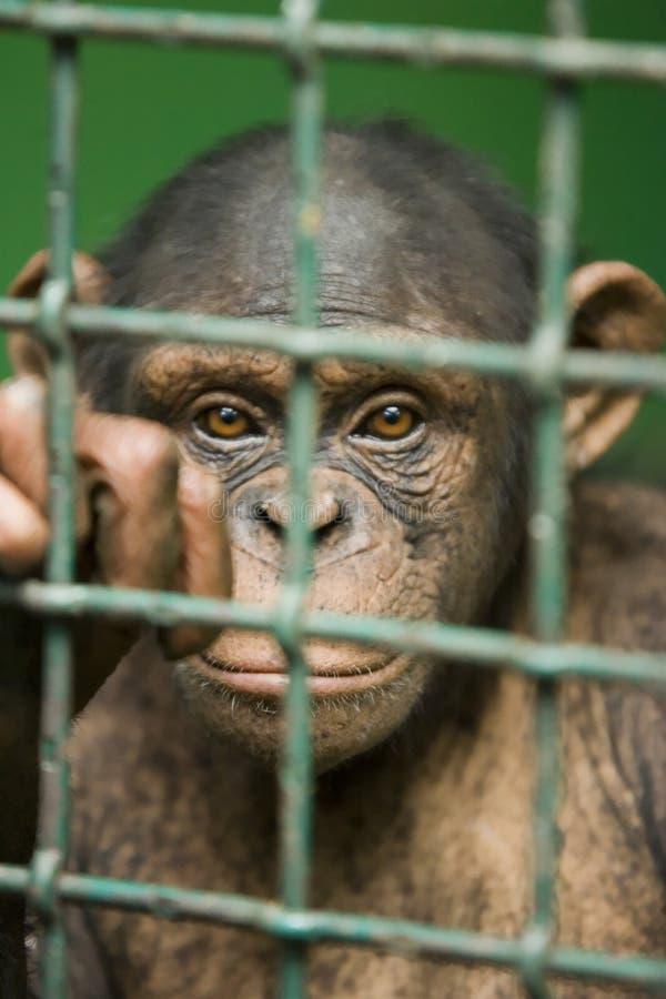 Gevangene stock fotografie