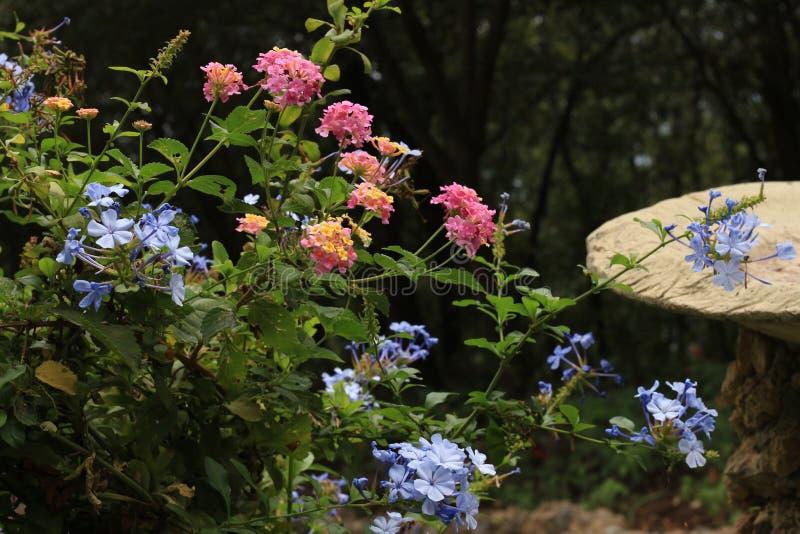 Gevarieerde Flora stock afbeeldingen