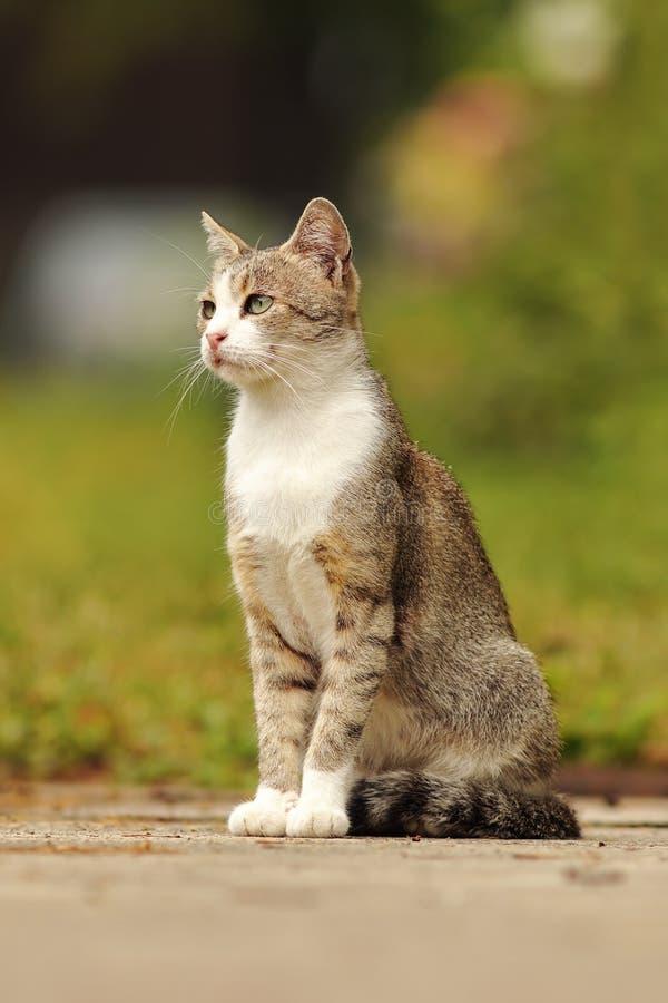 Gevlekte binnenlandse kat die zich in de tuin bevinden stock foto