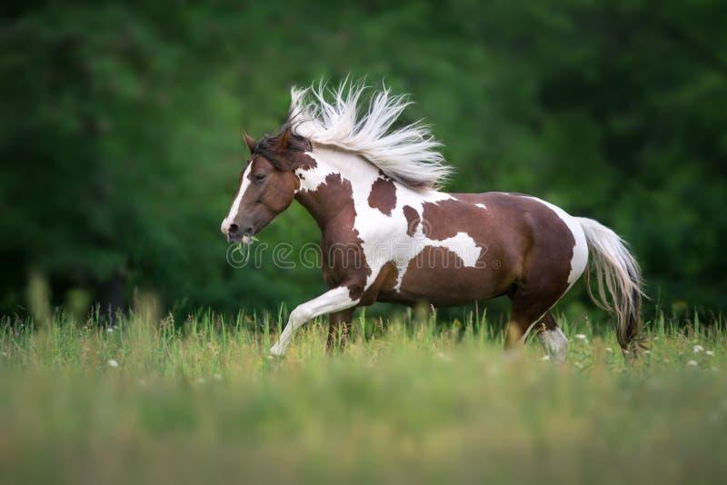 Gevlekte paardlooppas stock afbeelding
