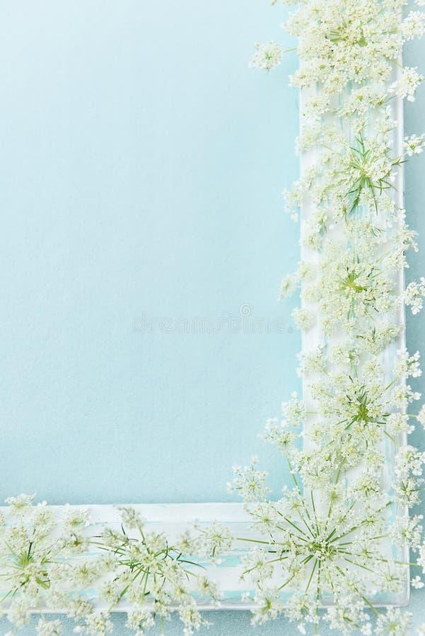 Gevoelig kader een hoek van een boom en levende witte zachte wilde bloemen Plaats voor uw inschrijvingen en ideeën stock foto's