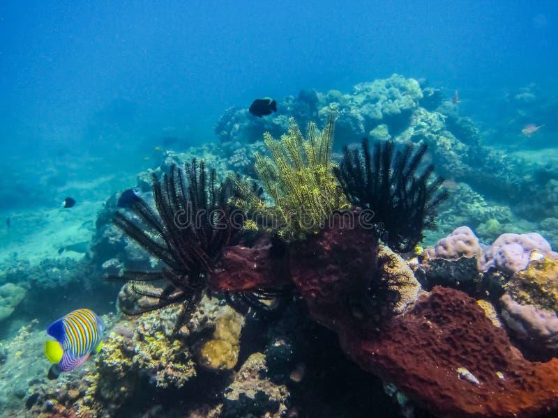 gevoelig kleurrijk koraal stock fotografie
