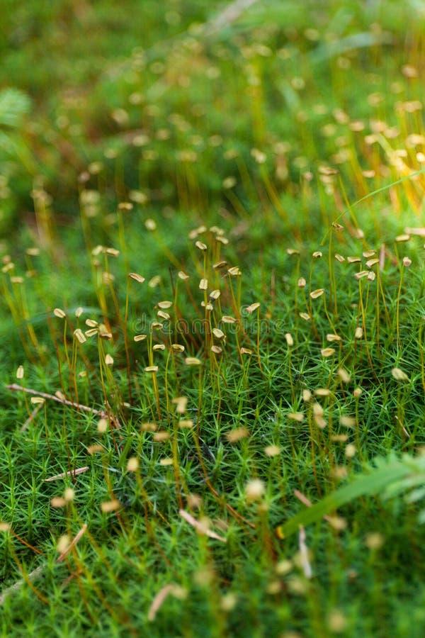Gevoelig mooi de herfst kleurrijk gras, milieugebied royalty-vrije stock fotografie