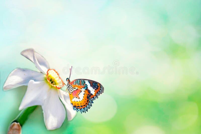 Gevoelig mooi lichtgroen natuurlijk van de de zomerlente patroon als achtergrond met narcissen en een witte vlindermacro Lichte l stock afbeeldingen