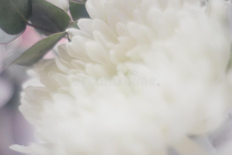 Gevoelige bloem in onduidelijk beeld, ASTRA stock fotografie