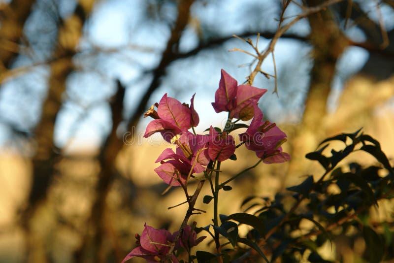 Gevoelige bloem op mijn boerderij royalty-vrije illustratie