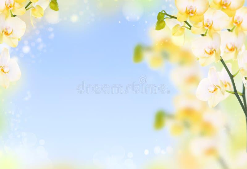 Gevoelige bloemachtergrond van gele orchideeën stock afbeeldingen