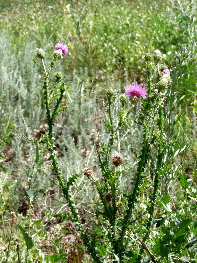 Gevoelige bloemen stock afbeeldingen