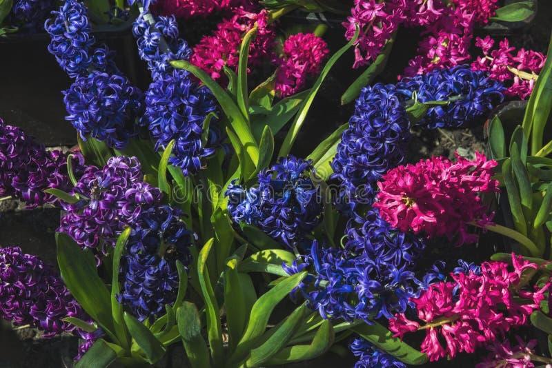 Gevoelige heldere de lentebloemen royalty-vrije stock afbeeldingen