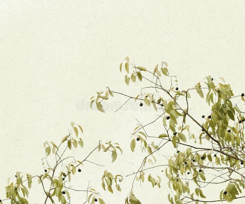 Gevoelige Takken van Bladeren en Bessen royalty-vrije illustratie