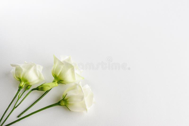 Gevoelige uiterst kleine witte bloemen op witte achtergrond stock afbeeldingen